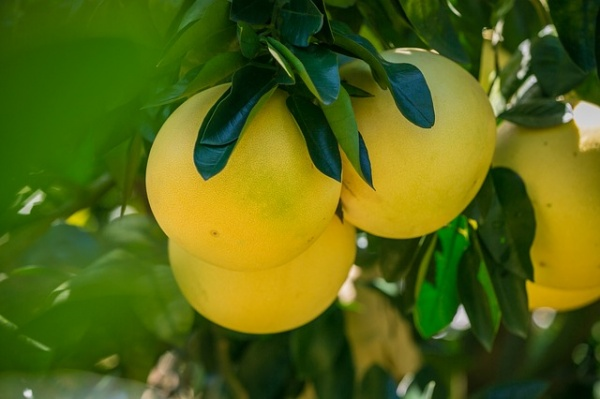 7 Health Benefits of Pomelos
