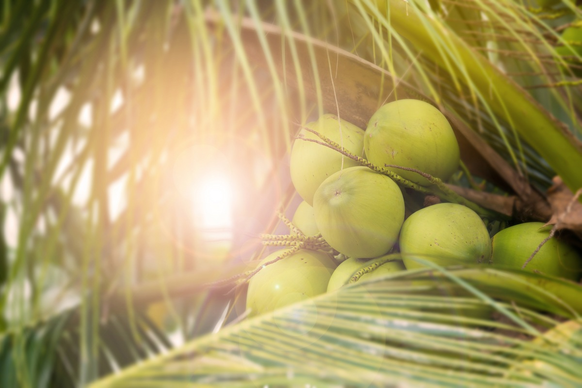 Top 10 Gifts of the Coconut Tree