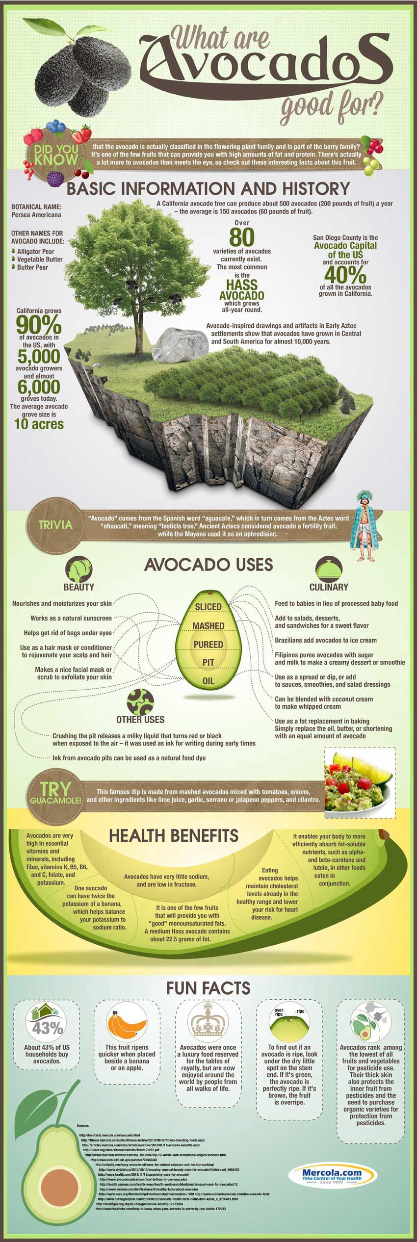 What Are Avocados Good For