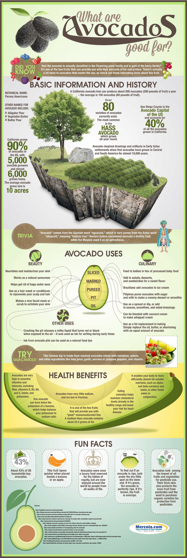 Avocado Uses And Health Benefits