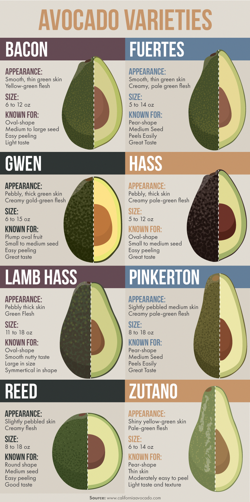 Avocado Varieties