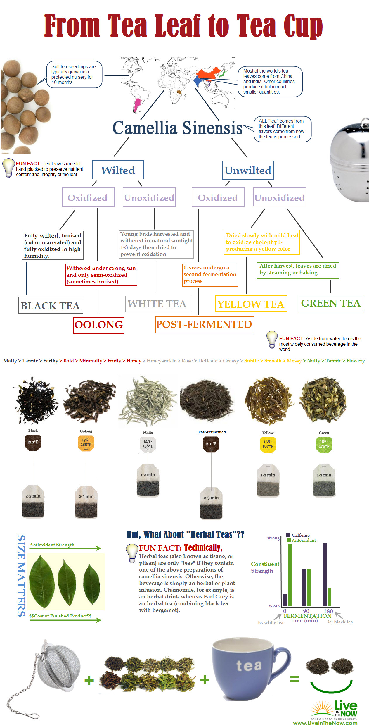 From Tea Leaf To Tea Cup