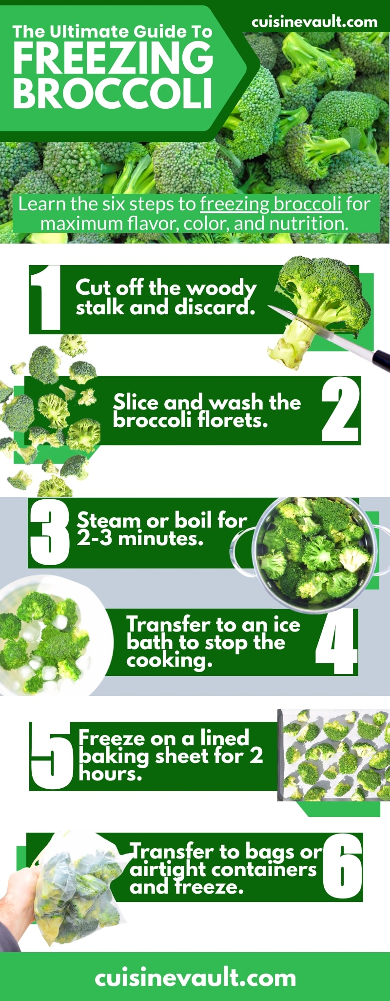 How To Freeze Broccoli – A Beginner's Guide