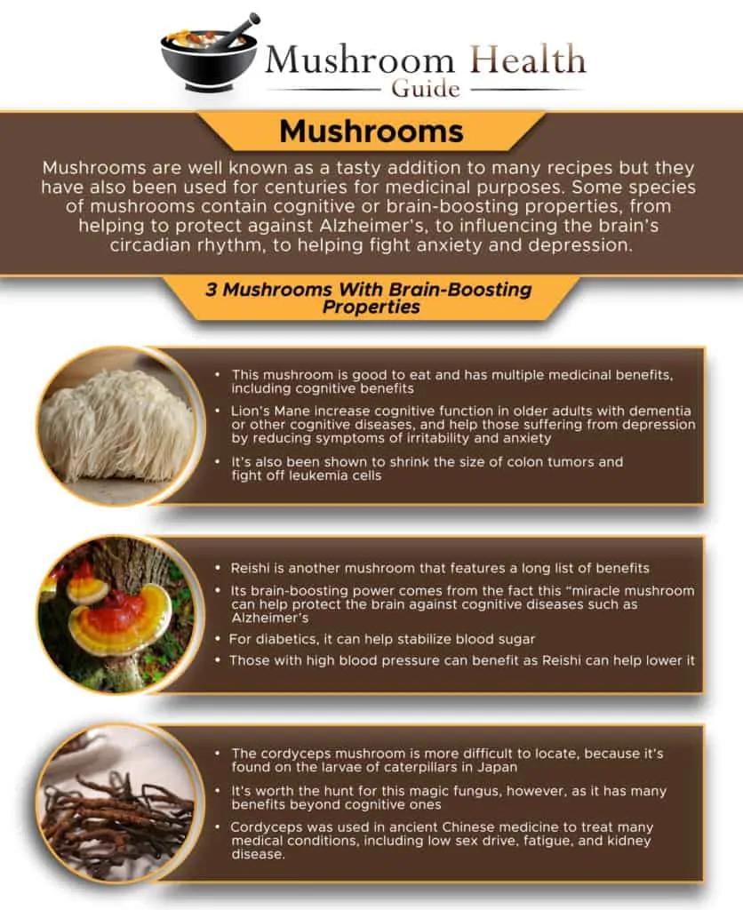 3 Mushrooms With Brain-Boosting Properties