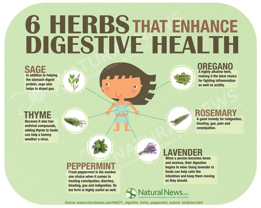 6 Herbs That Enhance Digestive Health