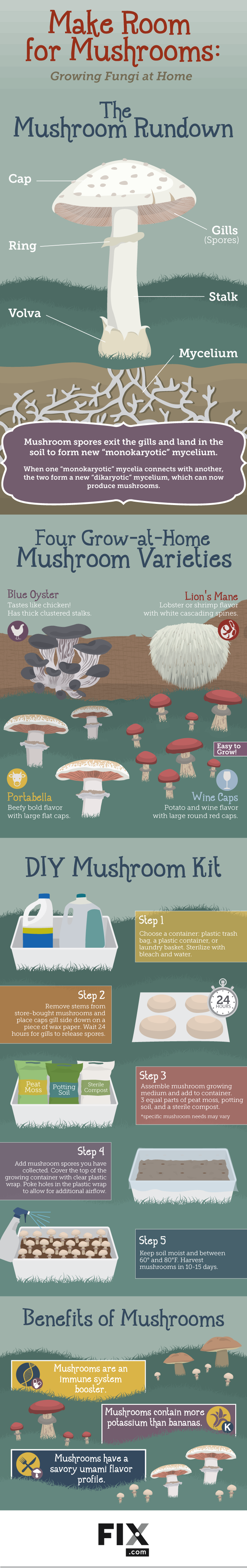Easy Guide To Growing Mushrooms At Home
