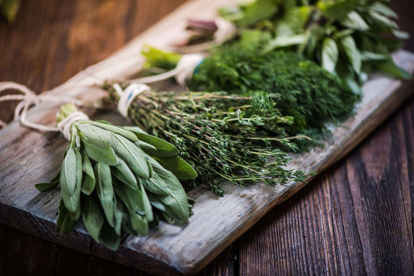 Everything You Need to Know About Herbs (24 Infographics)