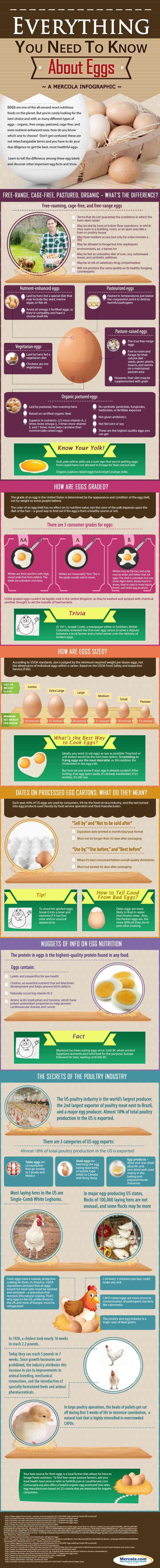 Egg Nutrition Facts and Information